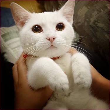 元ノラ猫のココロです!