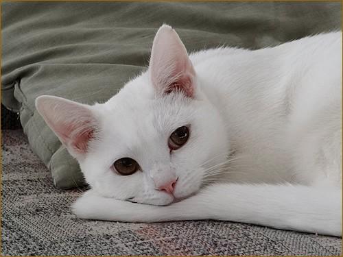 Cat model is posing