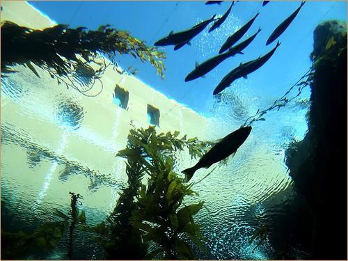 Flying fish at California Science Center