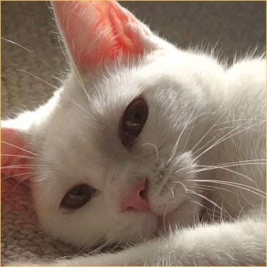 sleepy cat02