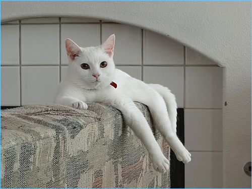 人間を見張るネコ