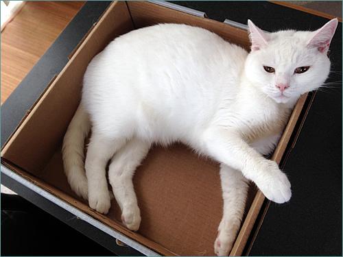 ダンボール猫こころ