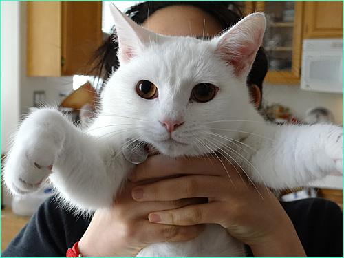 映画「猫侍」の玉乃丞をまねてみた。