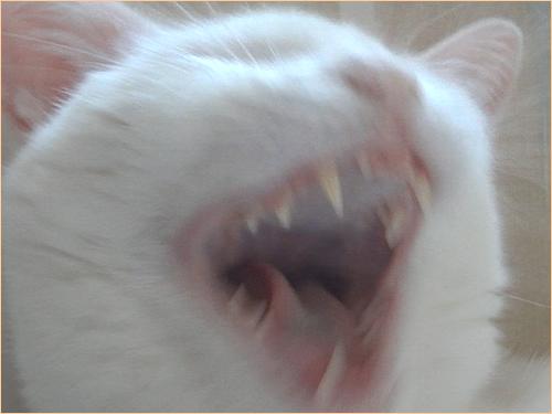 いつもは美ネコなのにエイリアンみたいなココロ