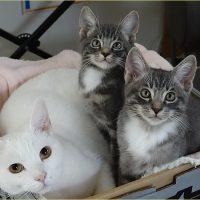 ダンボールのネコ籠