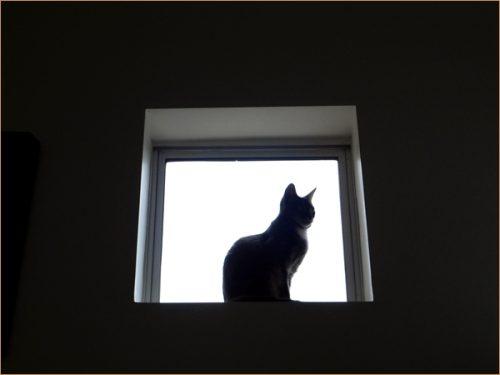 リビングの風景「高窓に佇むネコ」