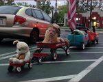 カリフォルニアの街角で遭遇したラジオフライヤーの六両編成
