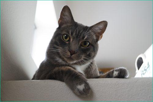 ネコに挨拶