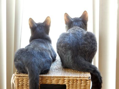 【ネコスナップ写真】兄ネコと妹ネコの会話
