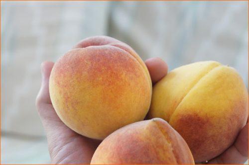 南カリフォルニアの自家製オーガニックな桃の木