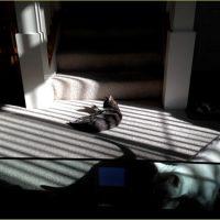 傾く陽の日差しとくつろぎネコ