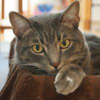 【猫写真】忙しいときはネコの手かりてみませんか!