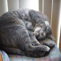 ネコがタヌキ寝入り
